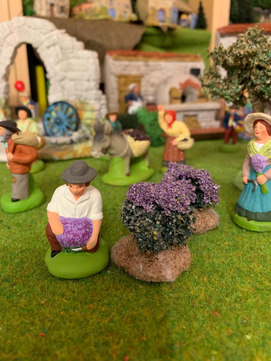 Lavendelschneider